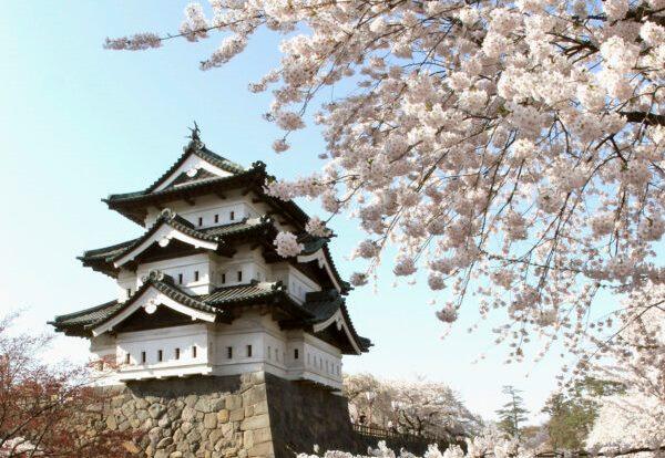Cada primavera, cientos de personas acuden al magnífico castillo de Hirosaki para participar en el festival de los cerezos en flor. (Koichi Kamoshida / Getty Images)