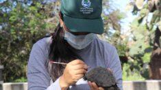 Arrestan a un policía por tráfico de 185 tortugas neonatas en Galápagos