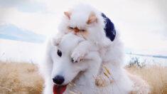 """Divertidas fotografías muestran la increíble amistad entre un gatito """"gruñón"""" y un adorable perro"""