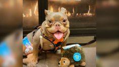 Cachorro con espina bífida plantado por sus potenciales adoptantes logra encontrar una familia perfecta