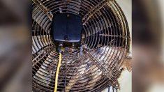 Rescatan a búho todo engrasado que quedó atrapado en ventilador de la cocina de un hotel por 2 días
