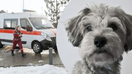 Perrito corre tras ambulancia en la que va su dueño y le permiten subir para acompañarlo al hospital