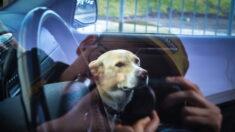 """Policía salva a cachorro encerrado en un auto en medio del intenso calor: """"Lo sacaron a tiempo"""""""