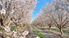 Un paseo en coche por la Ruta de la Flor del Condado de Fresno