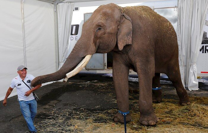 Un elefante asiático de circo, es trasladado el martes 6 de abril al Zoológico de Culiacán desde la ciudad de Guadalajara, estado de Jalisco (México). EFE/ Francisco Guasco