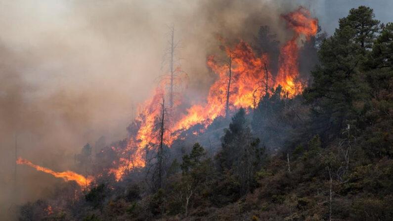En las últimas horas, el Cuerpo de Bomberos de El Salvador atendió 41 emergencias, en las que el 90 % fueron incendios de todo tipo. EFE/Miguel Sierra/Archivo