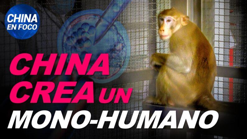 China crea un embrión mono-humano. Países se preparan para el peor escenario. (China en Foco/NTD en Español)