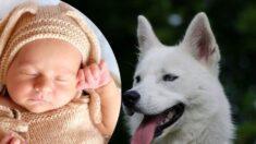 """Perro encuentra a bebé recién nacido abandonado en un parque: """"El cielo lo envió para rescatarlo"""""""