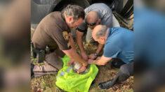 Encuentran vivo a bebé de 4 meses que fue abandonado por su madre en un arroyo de Michigan