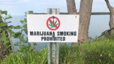 Corte Suprema de Florida rechaza iniciativa electoral que pretende legalizar la marihuana recreativa
