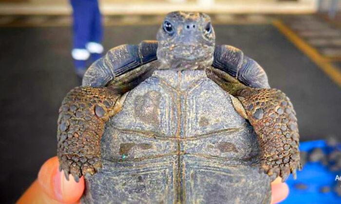 (Cortesía del Aeropuerto Ecológico de Galápagos)