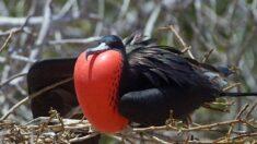 10 de las aves más extrañas del mundo