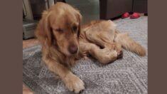 Perro sobrevive 32 días atrapado en un agujero: ¡Hasta que un perro que pasaba por ahí lo encontró!