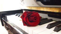 El olor y el sonido de las rosas