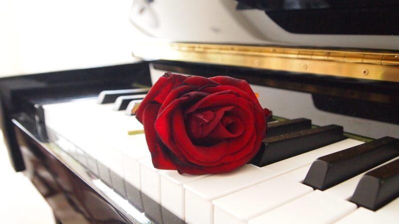 ¿Las flores se pueden transformar en música?   (FotoRieth en Pixabay)