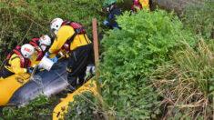 Rescatan a una ballena varada en el río Támesis en Londres