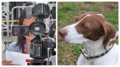 Reportera que cubría el robo de un perro se convierte en la protagonista del rescate y atrapa al ladrón