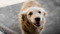 Camarera canina hace las mejores entregas de comida para perros en los parques, ¡adora las caricias!