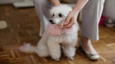 Abuelita impedida de adoptar por ser muy mayor, llora de emoción cuando la sorprenden con una cachorra