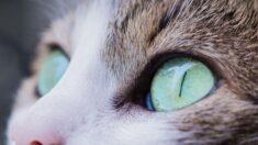 Gatito ciego y con enormes ojos es una sensación en redes sociales