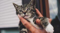 Bombero italiano derrama lágrimas tras rescate de un gatito atrapado: ¡Mostró su gran corazón!