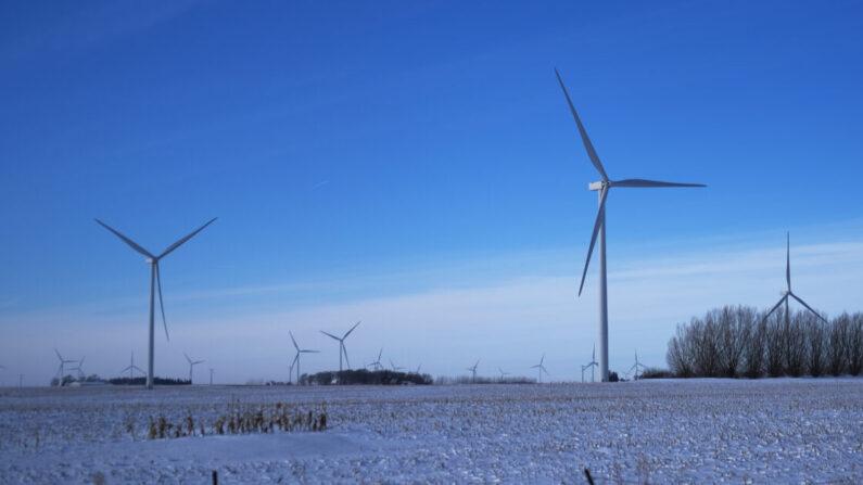 Un parque eólico, utilizado para generar energía eólica, se encuentra al lado de la carretera en Iowa en Sanborn, Iowa, el 16 de enero de 2020. (Spencer Platt/Getty Images)
