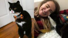 "Gatito con 2 patas amputadas por un accidente es adoptado: ""Estábamos destinados a estar juntos"""