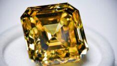 Hombre viajó por EE.UU. para extraer diamantes para anillo de compromiso y desenterró uno de 2.2 k