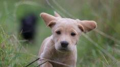 Joven adopta un perrito de tres patas y le fabrica una prótesis para que corra libre y feliz