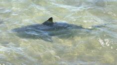 Hombre en estado grave tras ser atacado por tiburón en California