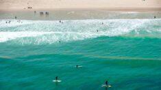 Reportan dos ataques de tiburones a un niño y a un hombre en Florida