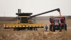 Jueza de Florida bloquea programa de alivio de deuda de Biden destinado a agricultores no blancos