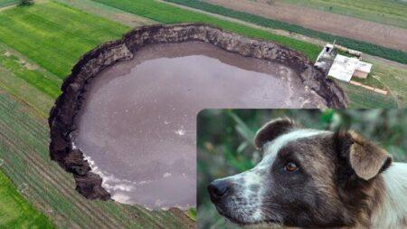 Graban otro perrito atrapado en el socavón de Puebla, el gobierno recorre el lugar y no lo encuentra