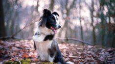 Perro enterrado vivo con múltiples fracturas sobrevive y es adoptado por el agente que lo rescató