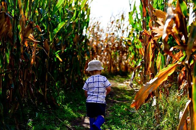 """Niño de 1 año y medio desaparece en maizal y la comunidad se une para hallarlo: """"Un angelito lo cuidó"""""""