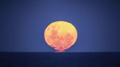 """""""Luna de fresa"""" del 24 de junio será la última superluna de 2021, ¡esto es lo que debe saber!"""