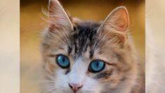 """Gatito regresa con su familia humana días después de creerlo muerto y ser incinerado: """"¿Es real?"""""""