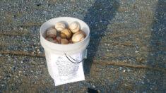 """Abuelo deja cubeta de pelotas de béisbol en campo de bateo con un mensaje: """"Atesoren estos momentos"""""""