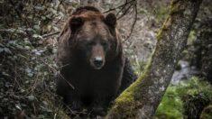 Joven de 17 años enfrenta a un oso negro para proteger a sus perros y lo empuja con todas sus fuerzas