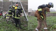 ¡Lo lograron!: Rescatan a Spay y Spike, los perritos que cayeron dentro del enorme socavón de Puebla