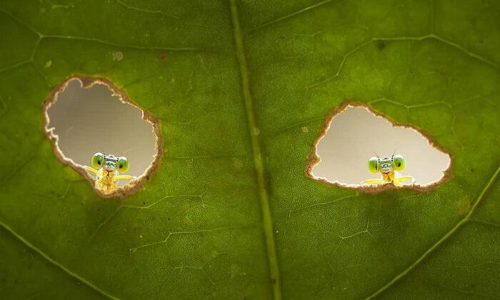 """Fotógrafo de macrofotografía capta zigópteros y otros insectos que lo """"espían"""""""