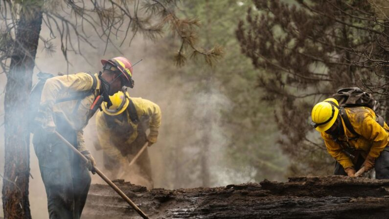 Equipos de bomberos realizan trabajos de limpieza en la División Echo Echo del Bootleg Fire en sus esfuerzos por combatir el incendio el 25 de julio de 2021 en el Fremont-Winema National Forest de Oregón (EE.UU.). (Mathieu Lewis-Rolland/AFP vía Getty Images)