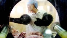 Científicos chinos producen cerdos modificados genéticamente para trasplantes humanos