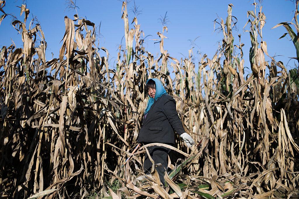Ante la escasez de alimentos, China investiga a altos funcionarios