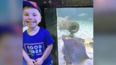 """Mantarraya aparece """"muy feliz"""" en una fotografía de un niño de 3 años en el zoológico"""