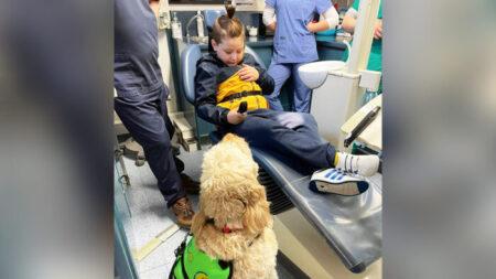 Niño con autismo teme al sillón del dentista hasta que revisan primero los dientes a su perro de servicio