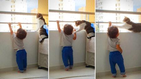 Gato protector ve al niño de la familia alcanzar la baranda del balcón y actúa de forma adorable