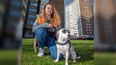 Heroico perro salva la vida de su dueña cuando dos desconocidos la atacan con cuchillo en la calle
