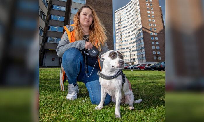 Heroico perro salva la vida de su dueña cuando dos desconocidos la atacaron con cuchillo en la calle