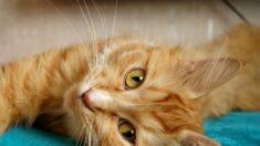 """Gato """"contratado"""" como exterminador de ratones en estación de tren se convierte en una celebridad"""